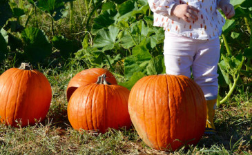 Our Trip to the Pumpkin Patch 2016